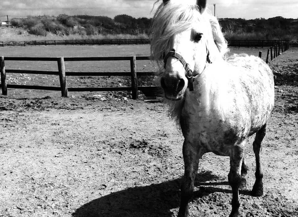 Feeney's Riding Centre